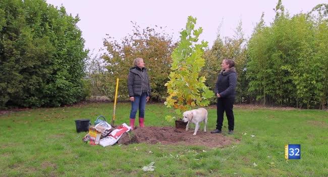 Canal 32 - Le Jardin de Nathalie - et si vous plantiez un Liriodendron ?