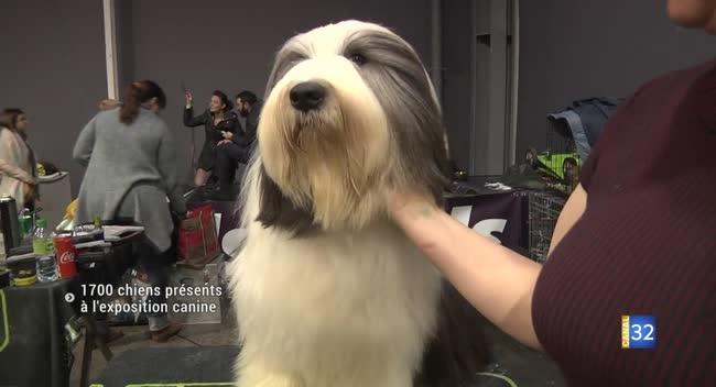 Canal 32 - 1700 chiens à l'exposition canine à Troyes