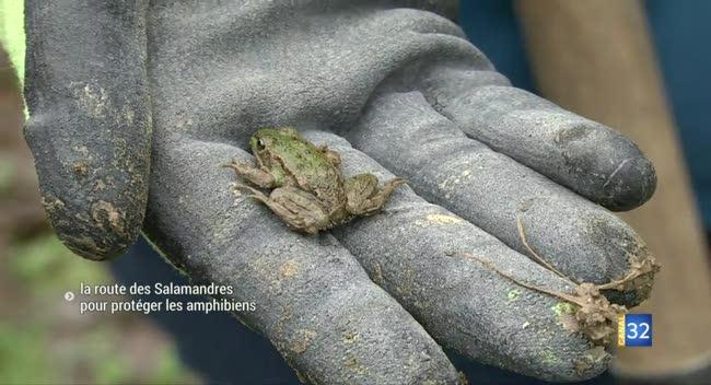 Canal 32 - À Mesnil-Saint-Père, les amphibiens en sécurité pour leur marche nuptiale