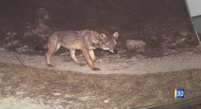 Canal 32 - Grand Format : le loup dans l'Aube