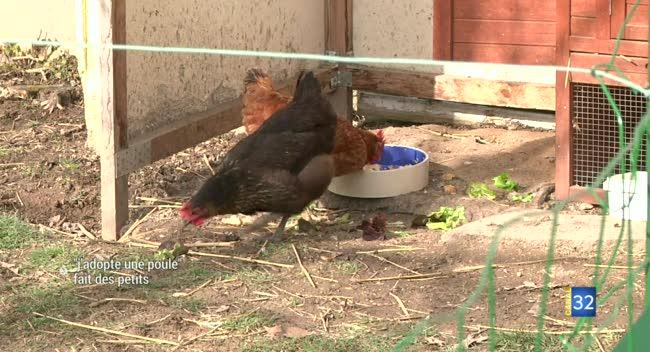 Canal 32 - J'adopte une poule fait des petits à Pont-Sainte-Marie