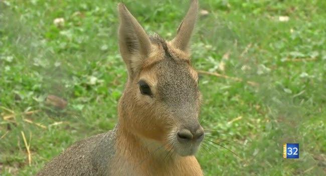 Canal 32 - Kangourous et suricates en plein coeur de l'Aube