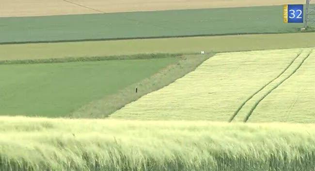 Canal 32 - La biodiversité alliée de l'agriculture