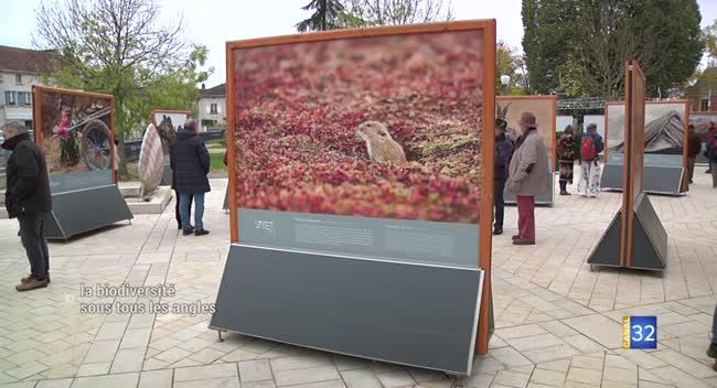 Canal 32 - La biodiversité dans l'objectif du Festival Photo Montier