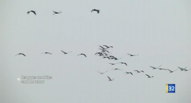 Canal 32 - Lacs de la forêt d'Orient : les grues cendrées en pleine migration