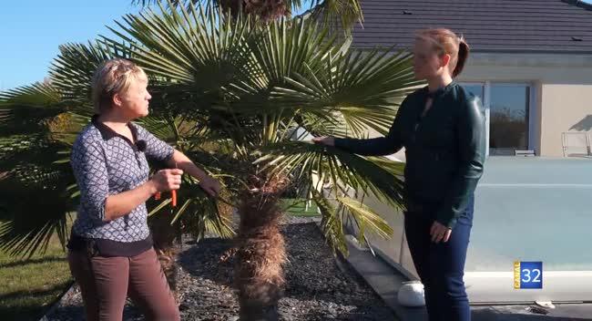 Canal 32 - Le Jardin de Nathalie - comment bien protéger vos palmiers