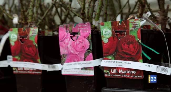 Canal 32 - Le Jardin de Nathalie - planter ses rosiers