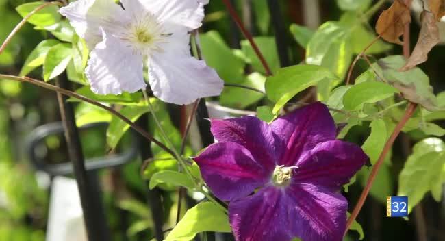 Canal 32 - Le Jardin de Nathalie - Pour une jolie plante grimpante, adoptez une clématite