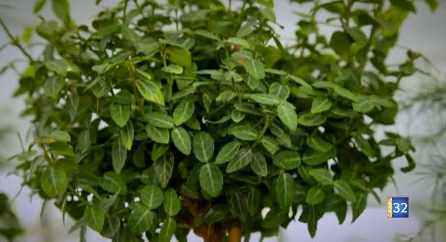 Canal 32 - Le Jardin de Nathalie - Des plantes sur tige pour structurer votre jardin