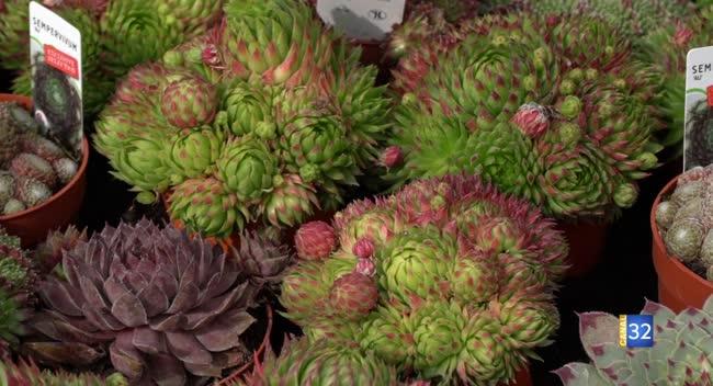 Canal 32 - Le Jardin de Nathalie - Adoptez le sempervivum pour de la verdure tout l'hiver