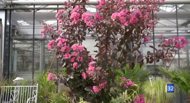 Canal 32 - Le Jardin de Nathalie - Lilas des Indes