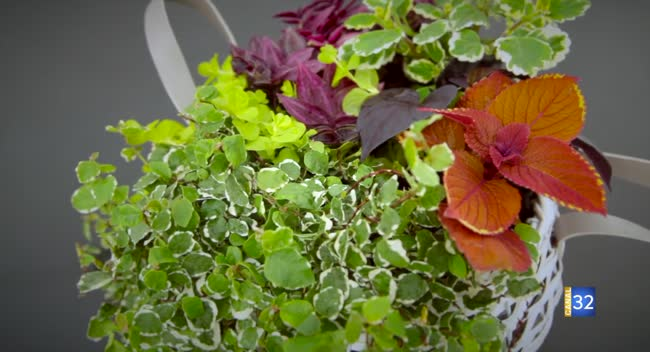 Canal 32 - Le Jardin de Nathalie - des jardinières à feuillage