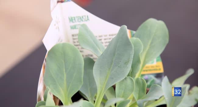 Canal 32 - Le Jardin de Nathalie - Mertensia, la plante... qui se mange !