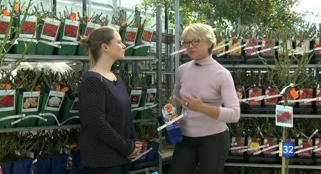 Canal 32 - Le Jardin de Nathalie - Il est temps de vous occuper de vos rosiers !
