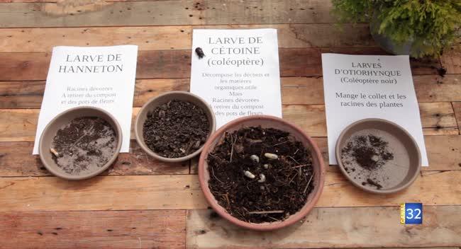 Canal 32 - Le Jardin de Nathalie - Identifiez et luttez contre les larves parasites du jardin
