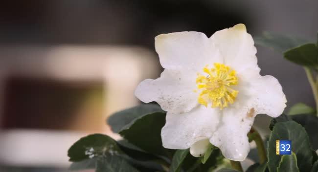 Canal 32 - Le Jardin de Nathalie - roses de Noël