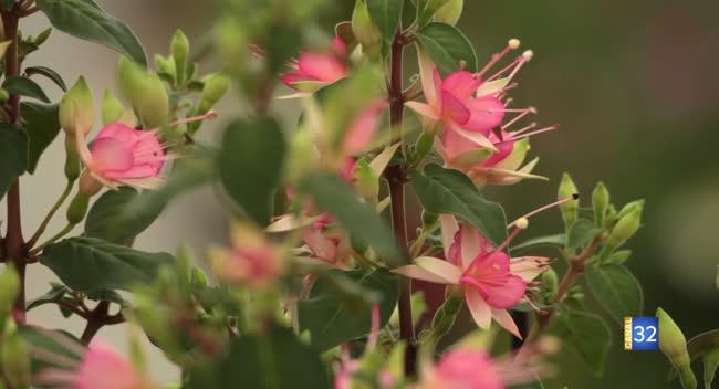 Canal 32 - Le Jardin de Nathalie - tout sur les fushia !