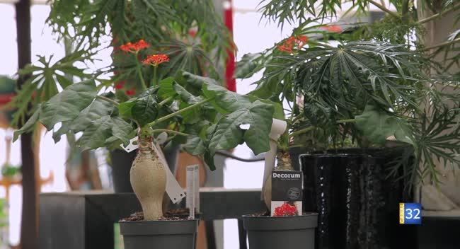 Canal 32 - Le Jardin de Nathalie - des plantes qui ne craignent pas la chaleur