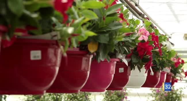 Canal 32 - Le Jardin de Nathalie - des plantes sur votre terrasse !