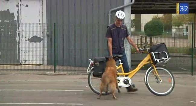 Canal 32 - Le vélo : arme de défense contre les chiens agressifs