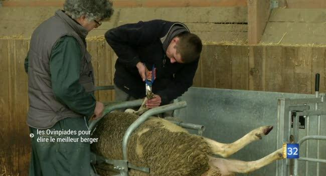 Canal 32 - Saint-Pouange : des Ovinpiades pour élire le meilleur berger