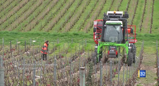 Canal 32 - Champagne : Les vignerons s'organisent face au Covid-19 (Reportage Grand Format)