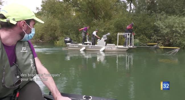 Canal 32 - Marnay-sur-Seine : une étude pour comprendre le comportement du brochet