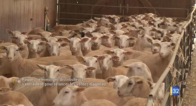 Canal 32 - Pâques : éleveurs et distributeurs s'entraident pour relancer les ventes d'agneau