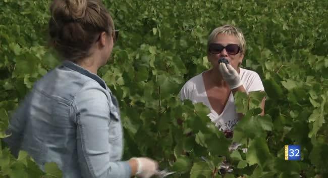 Canal 32 - Passion Champagne - vendangeur d'un jour