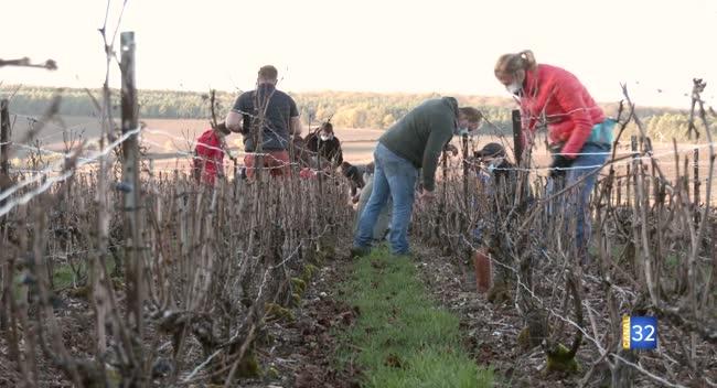 Canal 32 - Reprise de la formation à la taille de la vigne : les moniteurs ont dû s'organiser