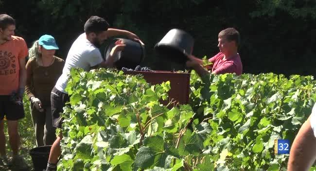 Canal 32 - Terres et Vignes - Etudiants et viticulteurs aubois ensemble pour les vendanges