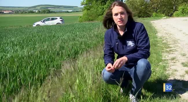 Canal 32 - Terres et Vignes - agriculteurs et chasseurs ensemble pour la biodiversité