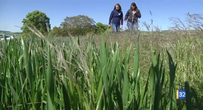 Canal 32 - Terres et Vignes - Favoriser la biodiversité dans les parcelles agricoles