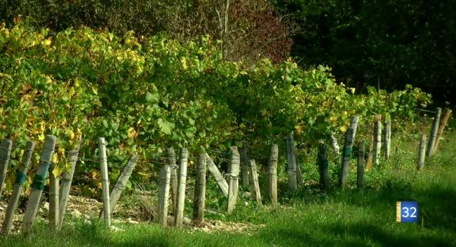 Canal 32 - Terres et Vignes - Soufflet Vignes