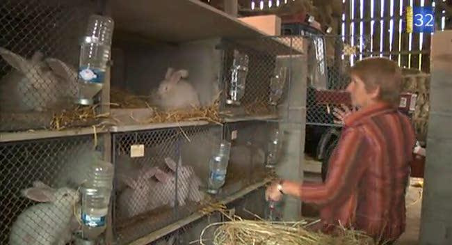 Canal 32 - Un élevage de lapins angoras vient d'ouvrir dans l'Aube