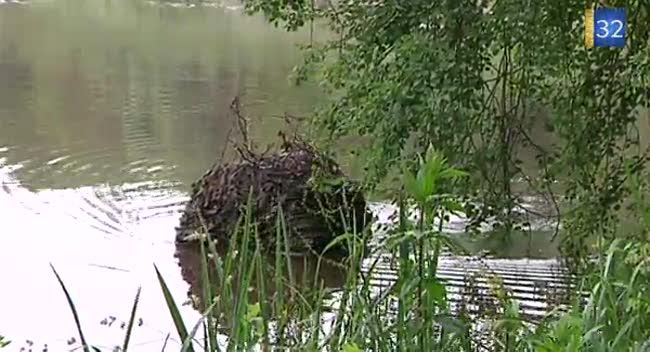 Canal 32 - Un photographe animalier à l'affût les pieds dans l'eau !