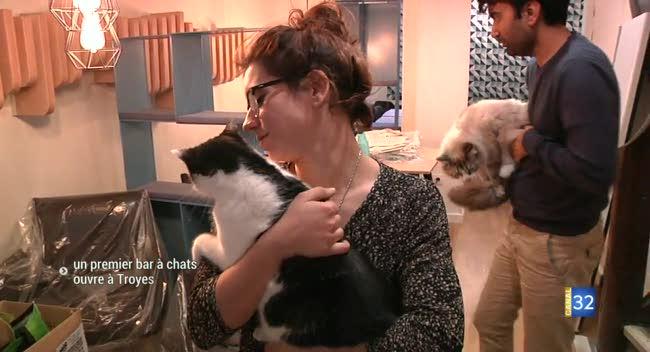Canal 32 - Troyes : l'ouverture d'un premier bar-restaurant à chats