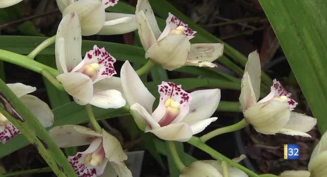 Canal 32 - Une exposition européenne sur les orchidées à Pont-Sainte-Marie