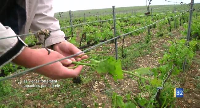 Canal 32 - Vallée de l'Arce : un épisode de grêle traumatisant pour les vignes