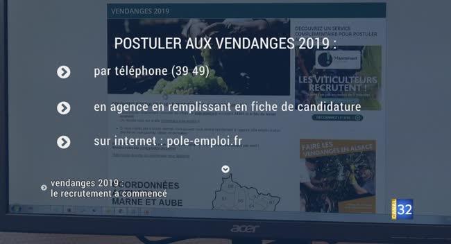 Canal 32 - Vendanges 2019 : le recrutement a commencé